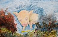 pig-photo