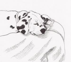 Dotty the Dalmation