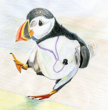 Puffin water colour004