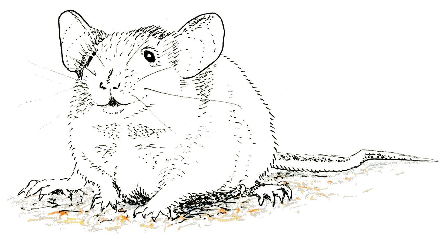 dizzy mouse001
